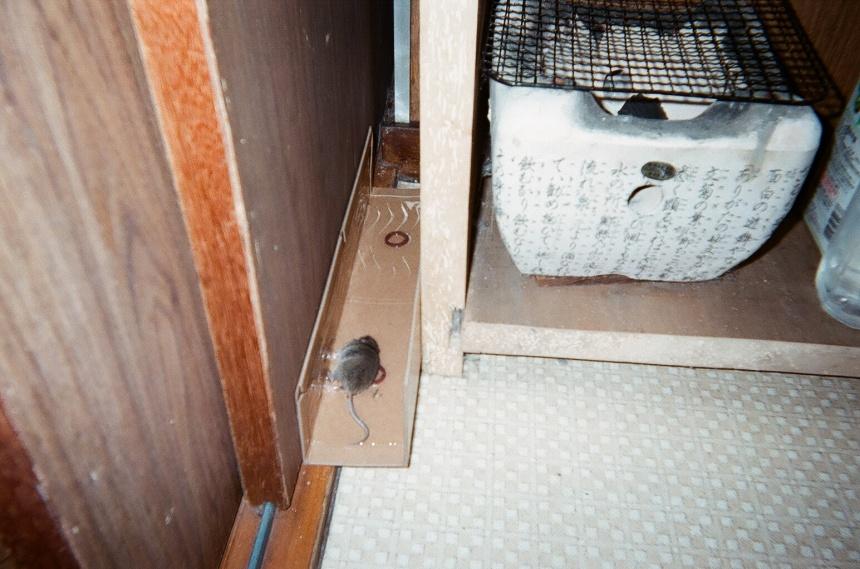 家のネズミ捕り