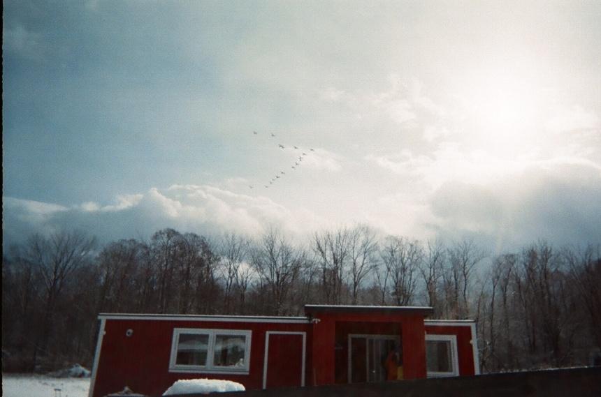 冬の始めに飛来する白鳥の群れ