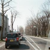 帰宅途中のプラタナス並木