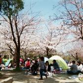 お花見シーズンの公園