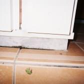 蛙の出迎え