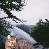 ゲストハウスの猫